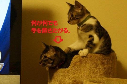 20141012-012.jpg