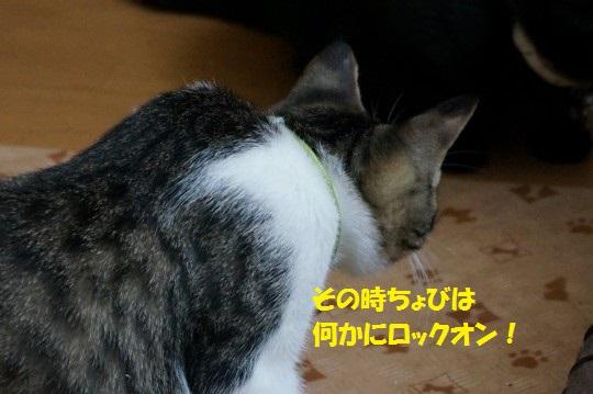 20141013-0010.jpg