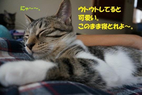 20141013-0011.jpg