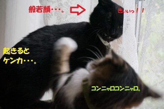 20141013-0013.jpg