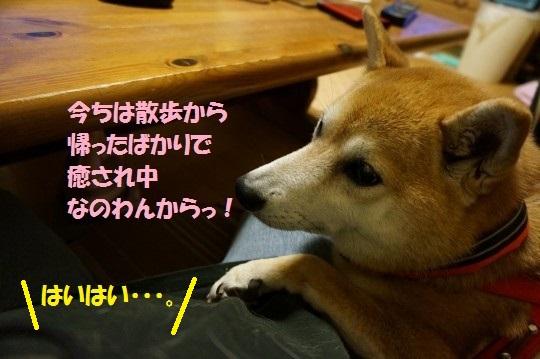20141018-006.jpg