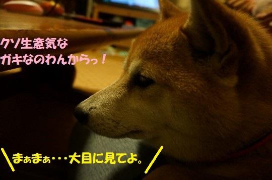 20141018-009.jpg