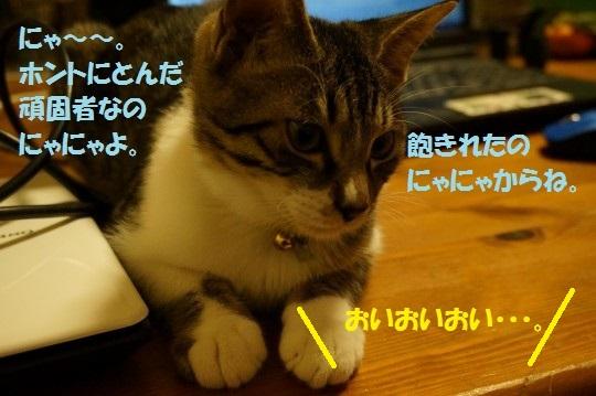20141018-010.jpg