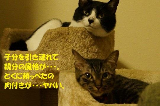20141020-07.jpg