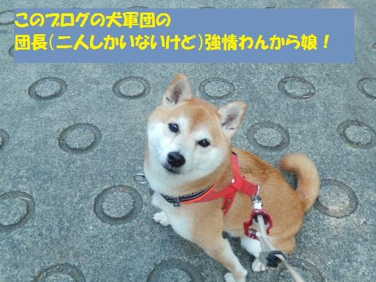20141021-01.jpg