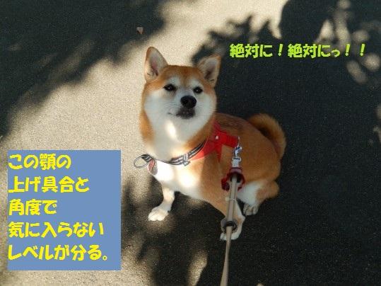 20141029-11.jpg
