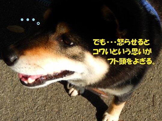 20141103-03.jpg