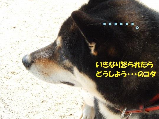 20141103-07.jpg