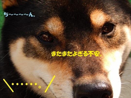 20141103-09.jpg