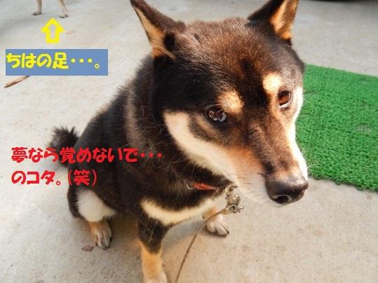 20141103-10.jpg