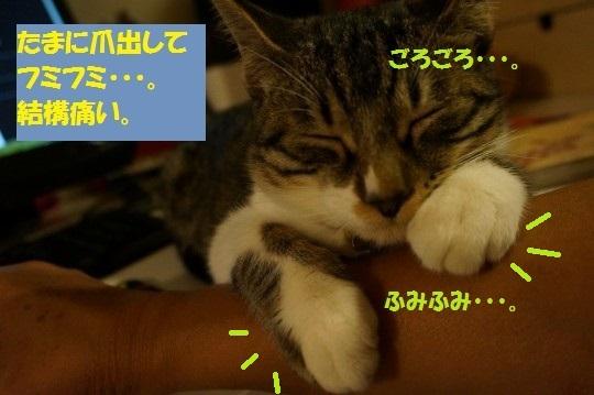 20141104-0007.jpg