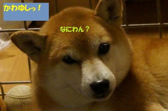 20141106-06.jpg