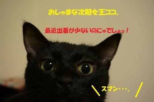 20141108-004.jpg