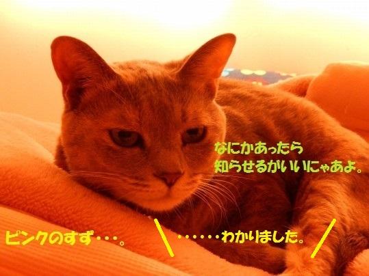 20141108-010.jpg