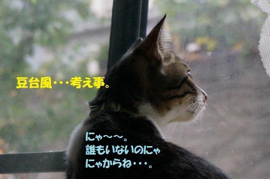 20141108-011.jpg