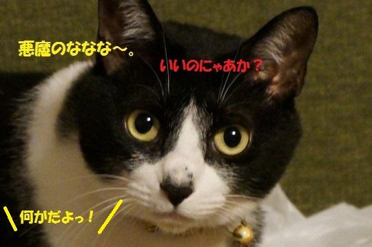 20141108-012.jpg
