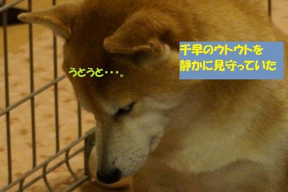 20141112-010.jpg