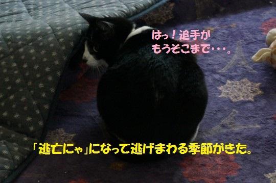 20141114-01.jpg