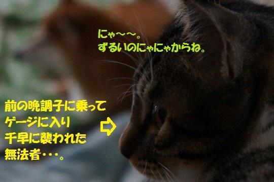 20141114-03.jpg