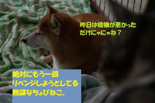20141114-04.jpg