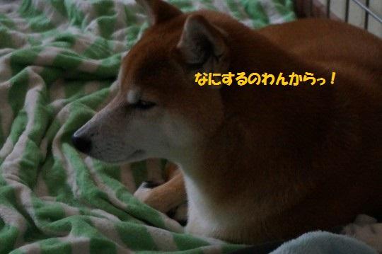 20141114-06.jpg
