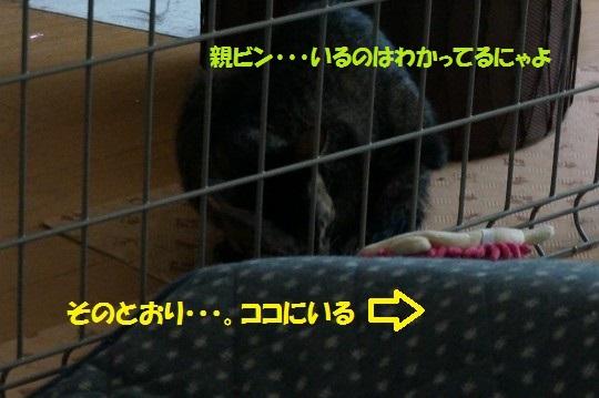 20141114-11.jpg