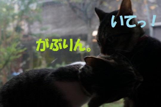 20141115-07.jpg