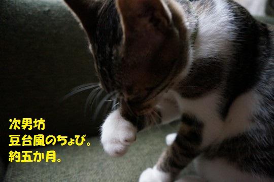 20141116-01.jpg