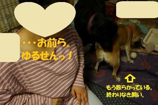 20141120-09.jpg