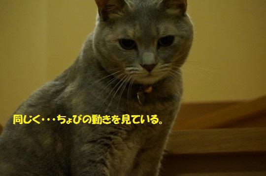 20141121-009.jpg