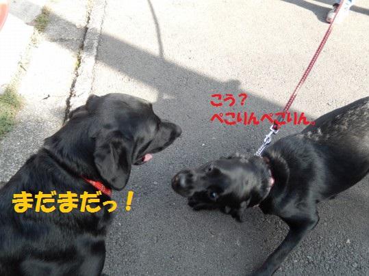 20141124-006.jpg