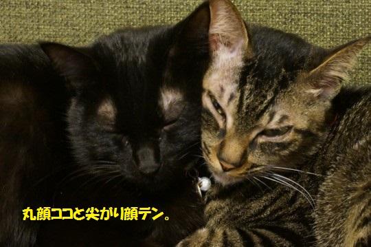 20141131-07.jpg
