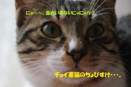 20141215-01.jpg
