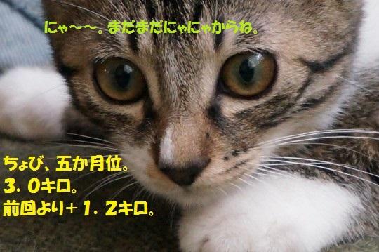 2014fuyu-01.jpg