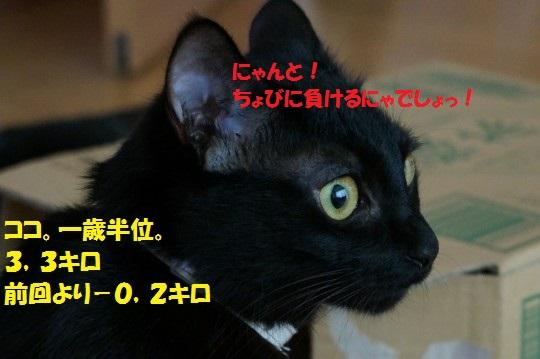 2014fuyu-02.jpg
