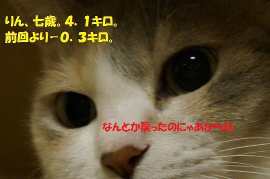 2014fuyu-04.jpg