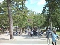 出雲大社 松の参道
