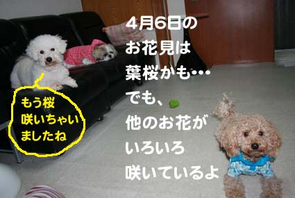01_20130322154630.jpg