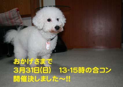 01_20130328204115.jpg