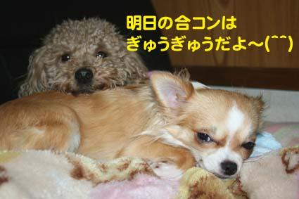 01_20130412190024.jpg