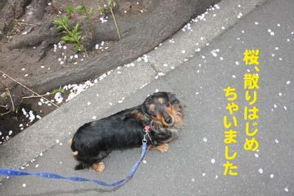 03_20130327155106.jpg