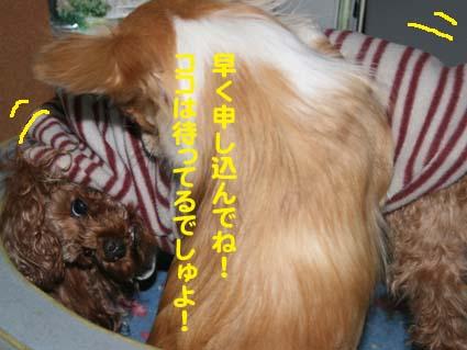 112_20130211214206.jpg