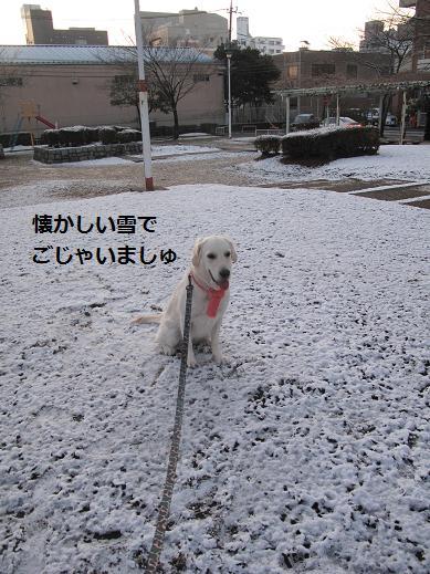 懐かしい雪