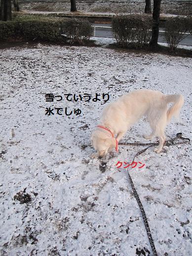 氷でしゅね