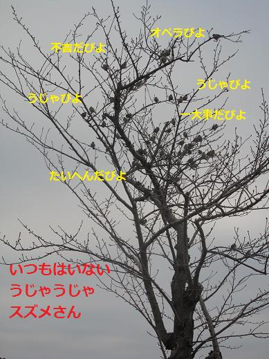 スズメの集団
