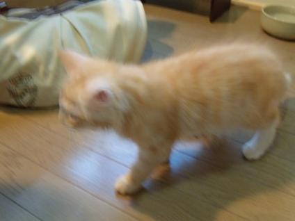 2010.8.6 初めて家に来た日のフレイ - コピー