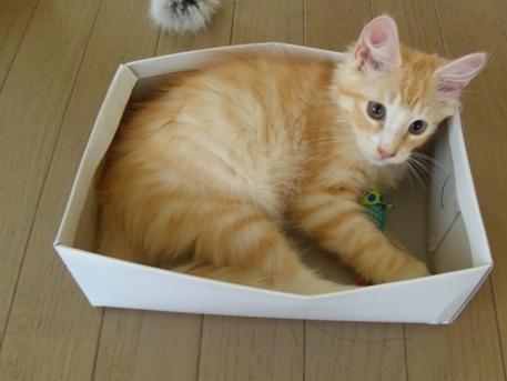 2010.8.16 靴箱の中に入るフレイ2