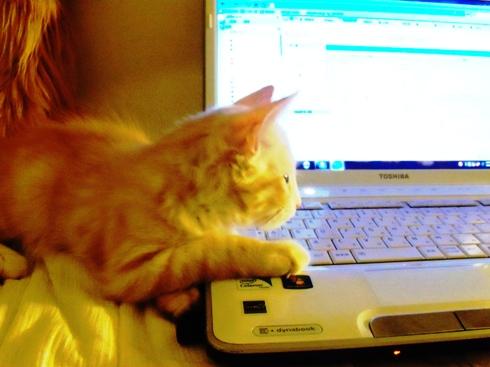 2010.8.15 PC操作するフレイ君 Nさんと話中に