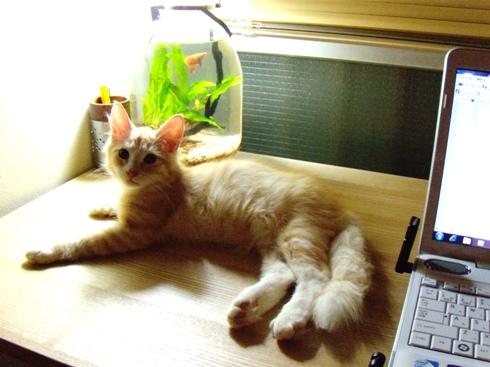 2010.8.30 テーブルの上のフレイ君2