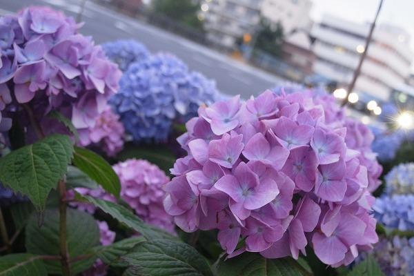MONOPiCT@東方旅客鉄道